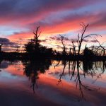 Menindee Lakes and Darling River tours