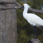 Mindendee birdlife